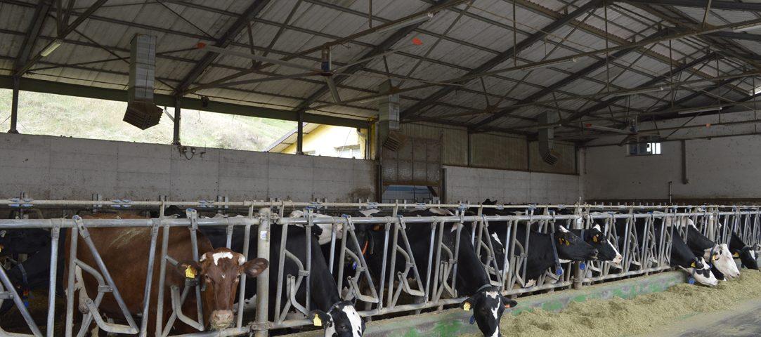 Raffrescatori evaporativi azienda agricola arcobaleno