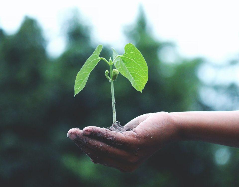 Ecologia e impatto ambientale